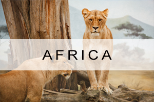 Africa Vacations